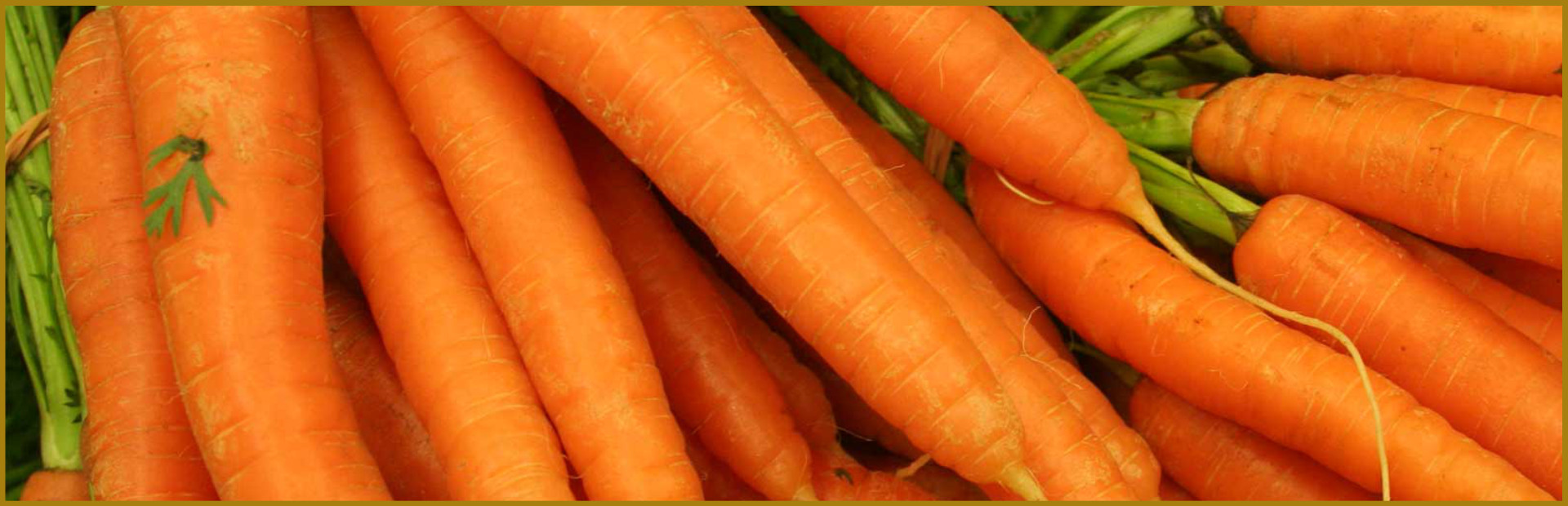 Kühnert Karottentrester